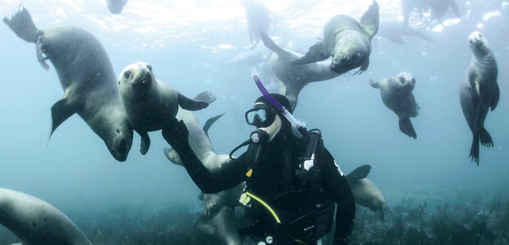 Foto de paisajes submarinos